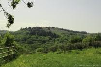 Fattoria Corzano - View