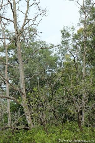 Mangroves (spot the proboscis monkey!)