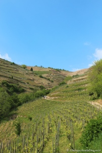 The hilly slopes of Hermitage