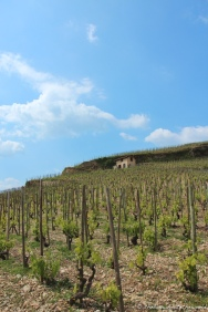 The vineyards of Hermitage